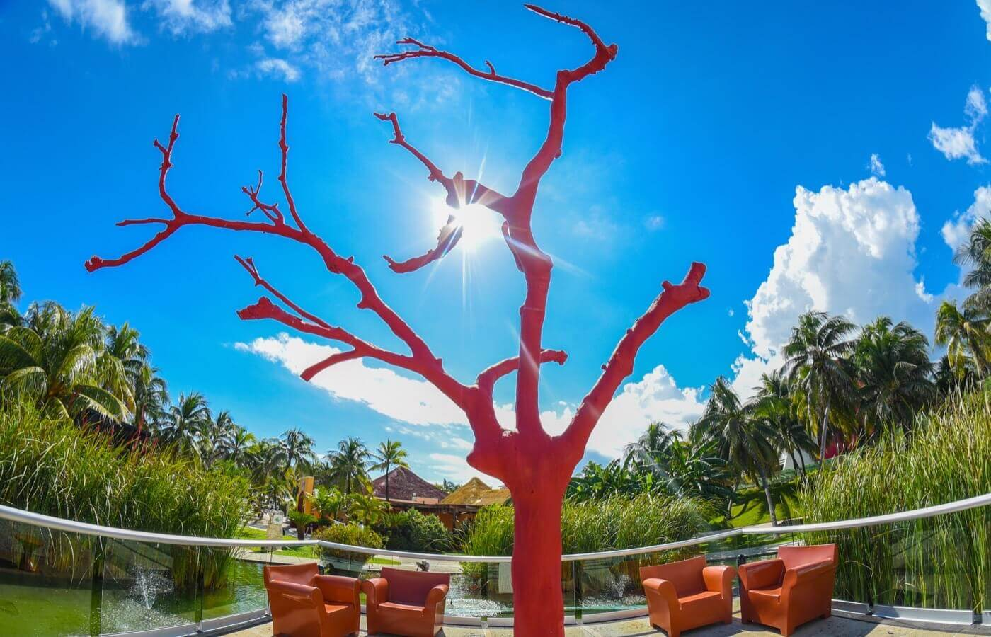 Leafless red tree in the open area of the hotel The Pyramid at Grand Oasis