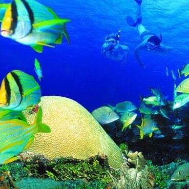 Image tour Coral Reef Snorkeling