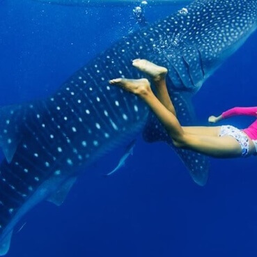 Image tour Swim with Whale Sharks