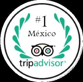 TripAdvisor Ranking #1 México